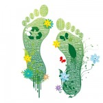 carbon footprint how to reduce it