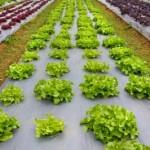 agro-ecological-farming-model