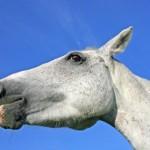 horsemeat-scandal