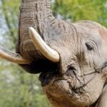 csr-ivory-trade