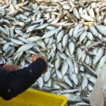the-sustainability-of-fisheries