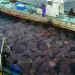 jellyfish-problems