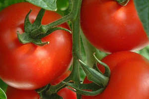 tomatoes-give-you-bo