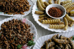 eat-insects