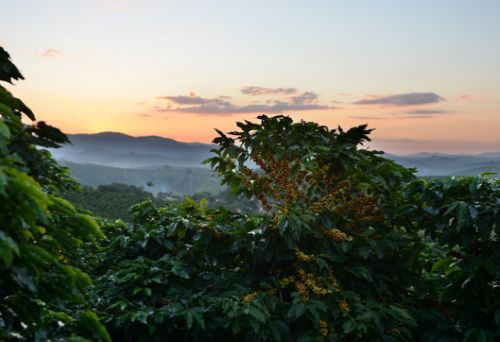 environmental impact of the coffee trade