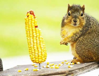 Where is this fat squirrel photo frenzy coming from?