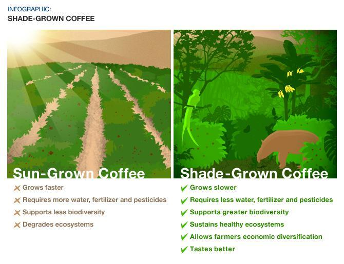 Eco-friendly and responsibly sourced coffee. Shade-grown coffee grows slower, requires less water, supports greater biodiversity, etc.
