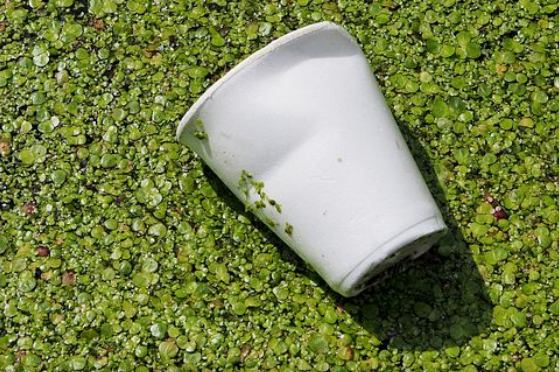 The Environmental Impact of Styrofoam Cups