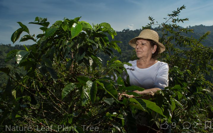 Traditional Coffee Growing Techniques