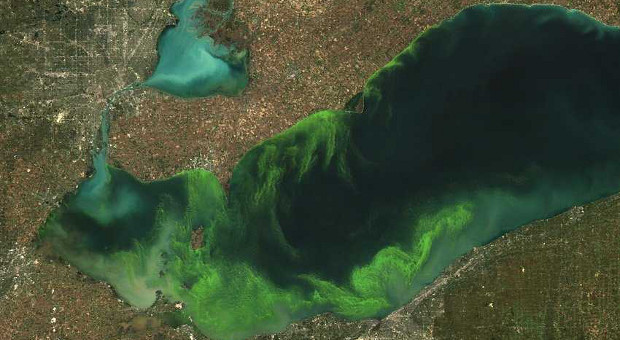 algae-in-lake-erie