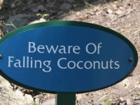One more thing to be scared of: coconuts kill