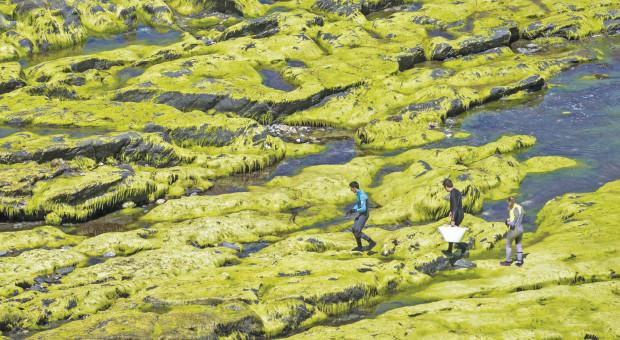 edible-seaweed