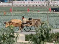 There's famine in North Korea