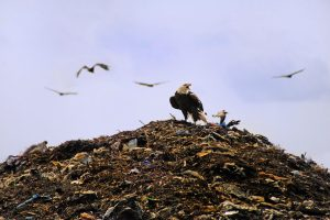 office-recycling-initiatives-landfill