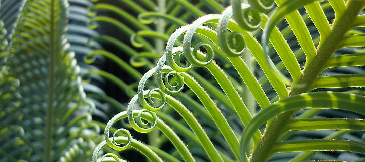 plant-neurobiology