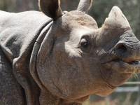 Stop rhino poaching and save the rhino