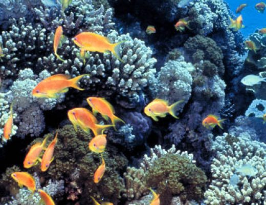 Sunscreen: Are We Killing Coral While Protecting Our Skin?